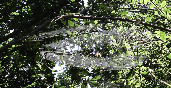 Spider web, Cancun, photograph (c) 2007 by Anita Brown